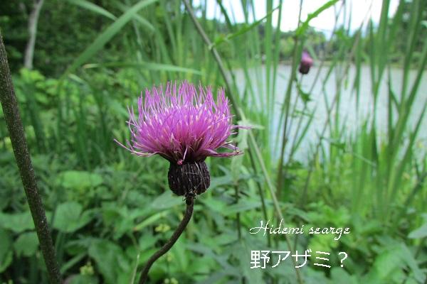 IMG_9364-3.jpg