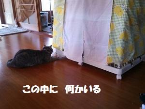 201507011322542a7.jpg