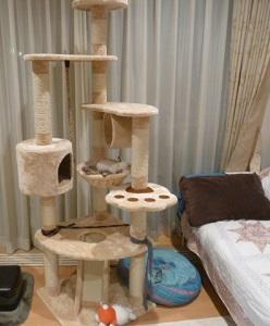 猫タワーでおやすみ 1