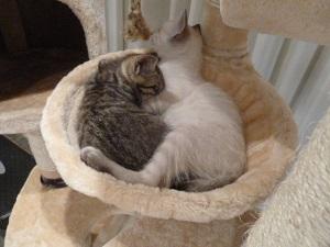 猫タワーでおやすみ 4