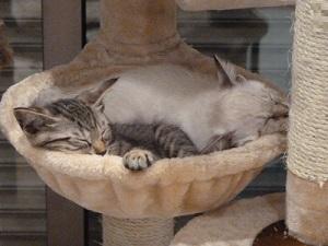 猫タワーでおやすみ 2