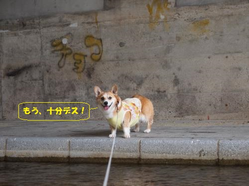 P8080517_convert_20150805232725.jpg