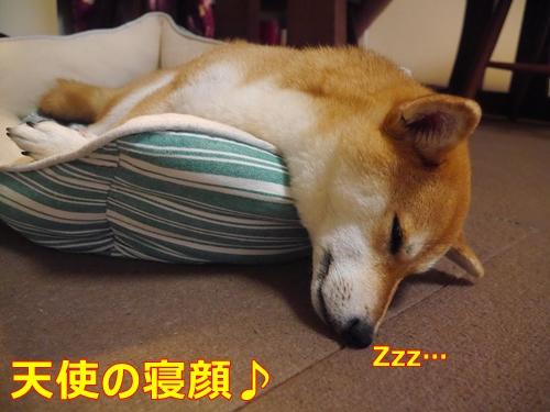 6おやすみ
