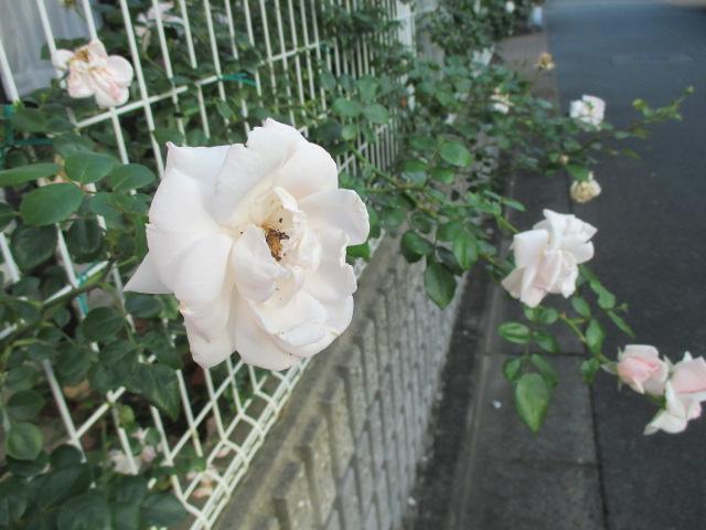 IMG_5250.jpg