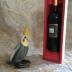 オカメワイン