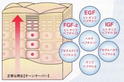 EGF.FGF.IGF.ペプチド7種類で目元ふっくら、ほうれい線にハリ、リフトアップ!肌に優しいドクターズコスメ【ミユーノアージュ】