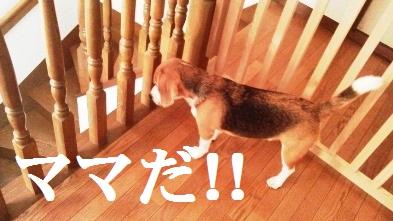 京都は,どしゃ降りの雨でした!
