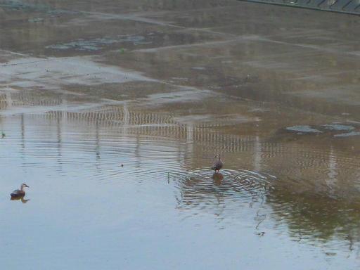 20150619・雨の日のささやき16