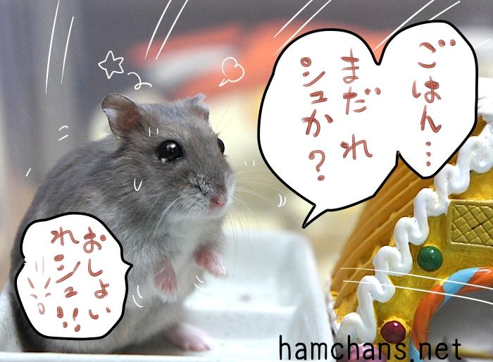ご飯・・まだれシュか?  遅いれシュ! ! !