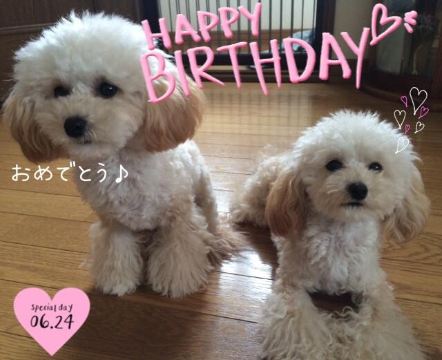2015.6.24みぃちゃんママお誕生日