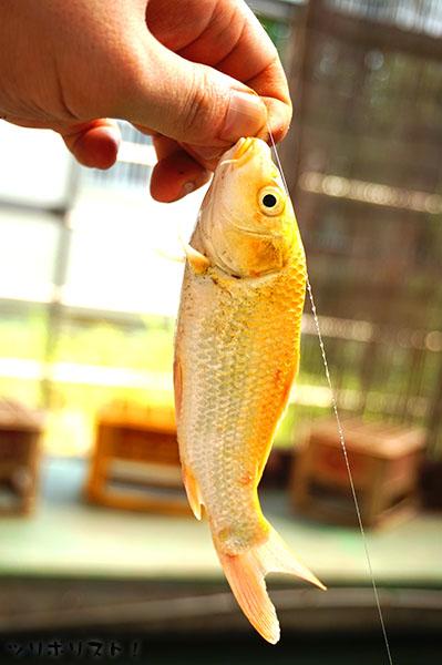 せきね養魚場054