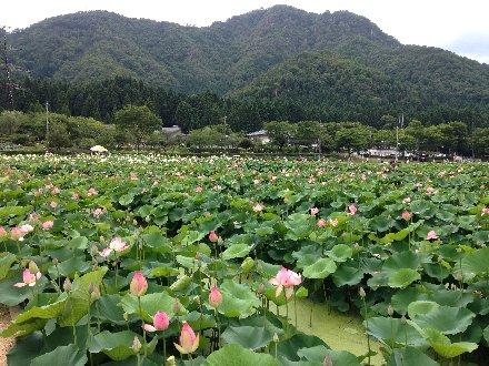hanahasu14-020.jpg