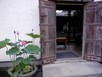 blog Lotus, Kasama_DSCN1046-6.22.15.jpg